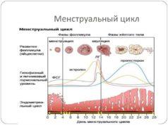 Народные рецепты для нормализации менструального цикла